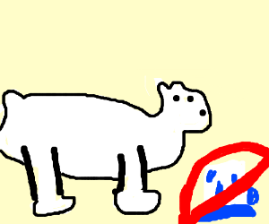 ice bear is not ice?