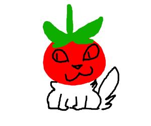 cat with tomato head