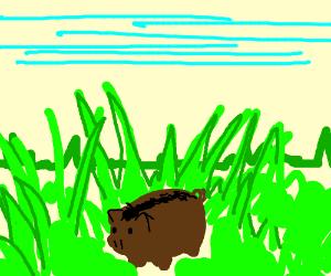 Tiny Boar