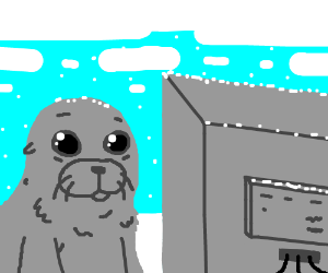 On the internet, no one knows you're a seal