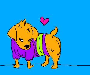 Puppy in a Sweater