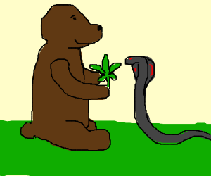 A Bear Feeds Weed to a Snake
