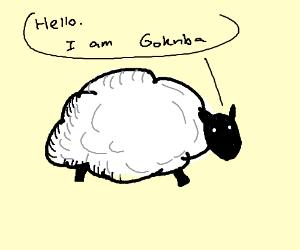 """Sheep named """"Goknba"""" introduces itself"""