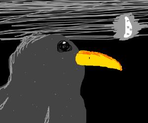 starling at night
