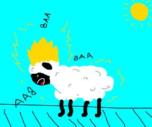 Gokuba the Sheep