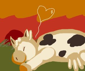 Dead cow in a field, hope not lost yet