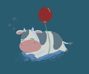 cow sleeping with a balloon