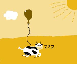 Cow takes nap in pasture w/ balloon