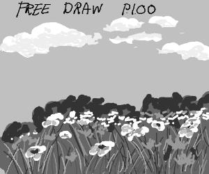 Free draw PIOO