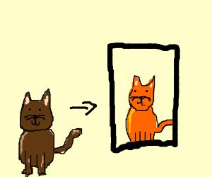 brown cat's selfie turns orange