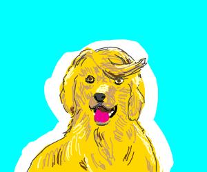 A dog with Trump's hair.