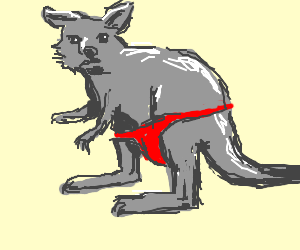 Kangaroo in red speedo