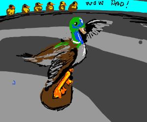 Skateboarding duck dad
