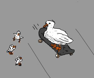 Skateboarding father duck impresses ducklings.