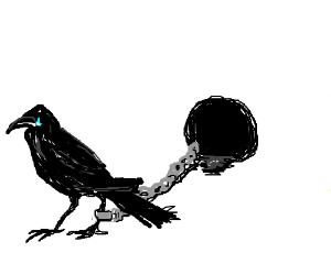 Sad crow chained to a black hole.