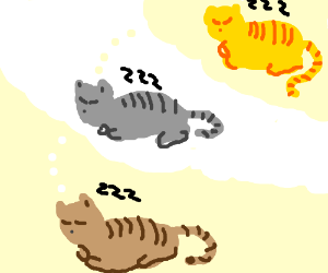 What cats dream about