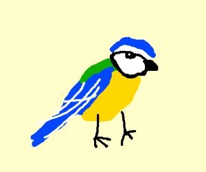 Blue tit (BIRD!!!)