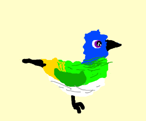 A blue, green, and yellow-jay