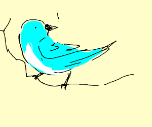 Alerted blue bird