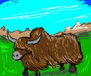 A prairie yak.