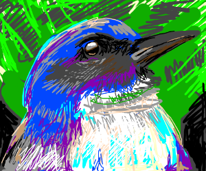 Ultramarine flycatcher (species of bird)