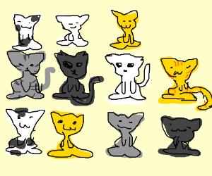 A dozen kittens
