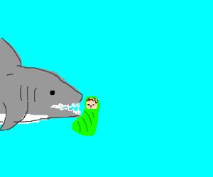 Half shark feasts on baby