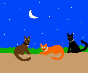 A Brown Cat, An Orange Cat and A Black Cat