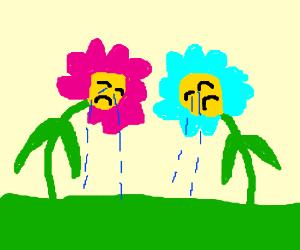 Emotional flowers.