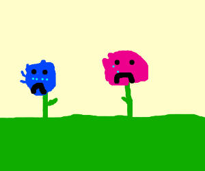 Two flowers (pink and blue) are crying