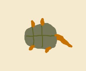 decapitated turtle