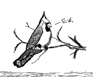 "A bird saying ""EW"""