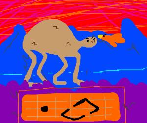 Bird VS Camel
