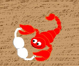 Red scorpion loves a bra