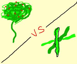 Bush on a stem vs green bean