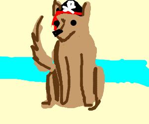 Adorable pirate dog