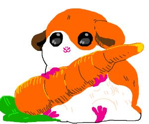 Guinea pig has a carrot