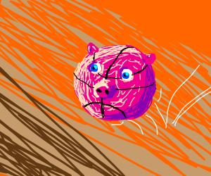 NBA pig