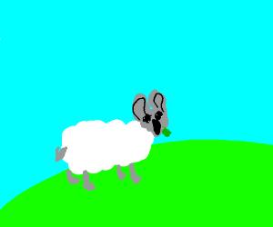 A koala-sheep