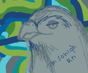 Psychedelic Sea Hawks