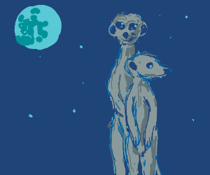 Meerkats in the night.