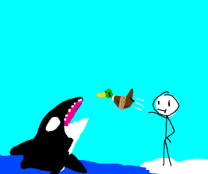 throw a duck to feed the orca