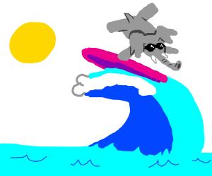 Elephant surfing