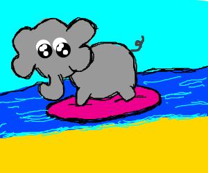 elephant wants to surf