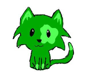 Green kitten with spot over one eye