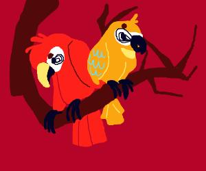 Parots on a cerving branch