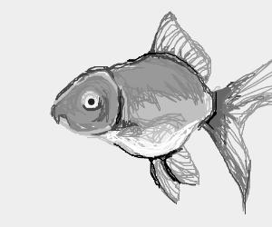 dat goldfish