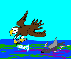A Shark Hunting An Eagle