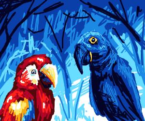 Scarlet macaw and Hyacinth macaw