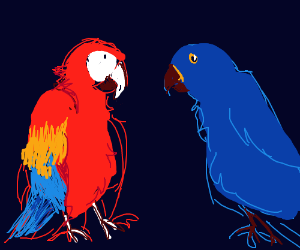 A group of red and blue macaws